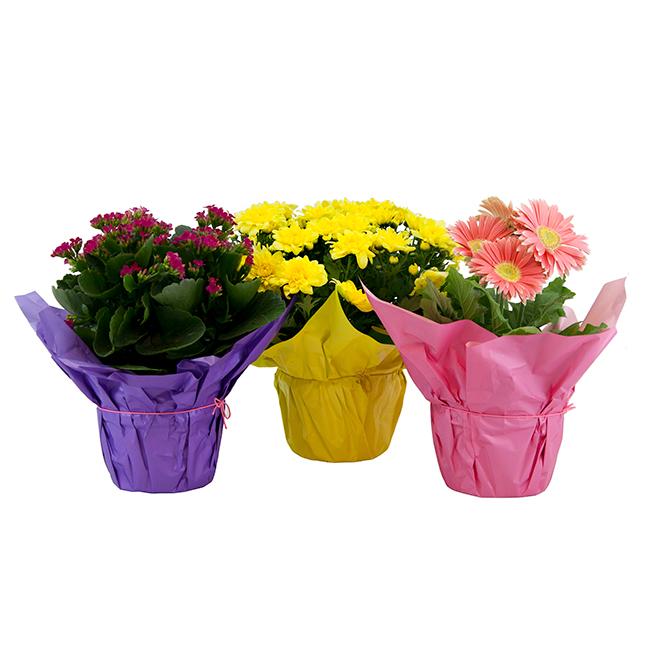 Plantes à fleurs assorties, 6 po