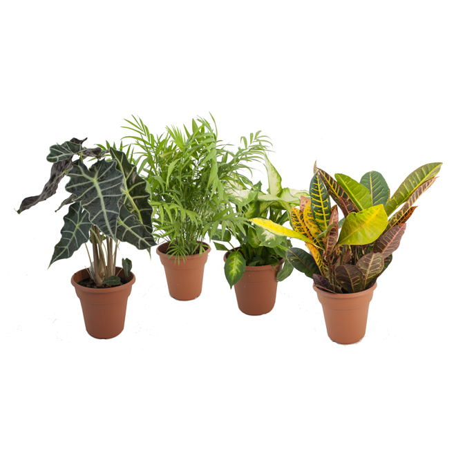 Tropical Green Mix - 6 In Assorted Colour