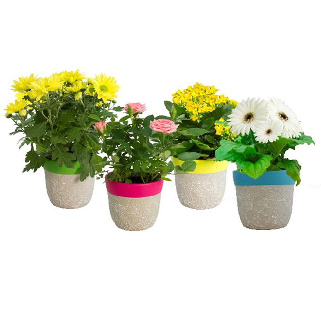 "Plantes à fleurs assorties, 5"""