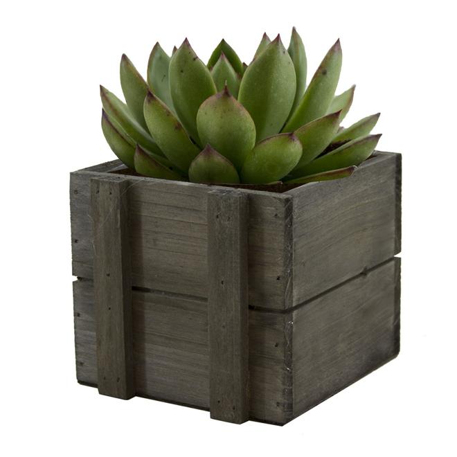Succulent In Crate, 3 1/2''