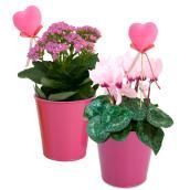 Plantes fleuries assorties, Chloe, pot en étain 5 po
