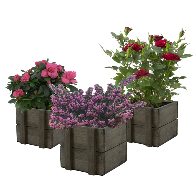 """Assorted Blooming Plants - Crate - 5"""""""