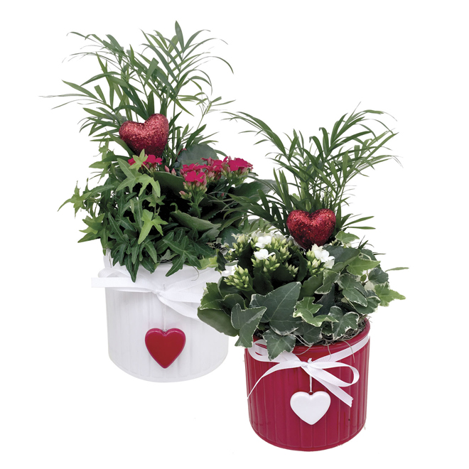 "Blooming Plants with Hearts - Aiko - 5.5"" Pot"