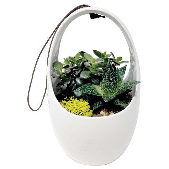 Corbin Blooming Plant - Green