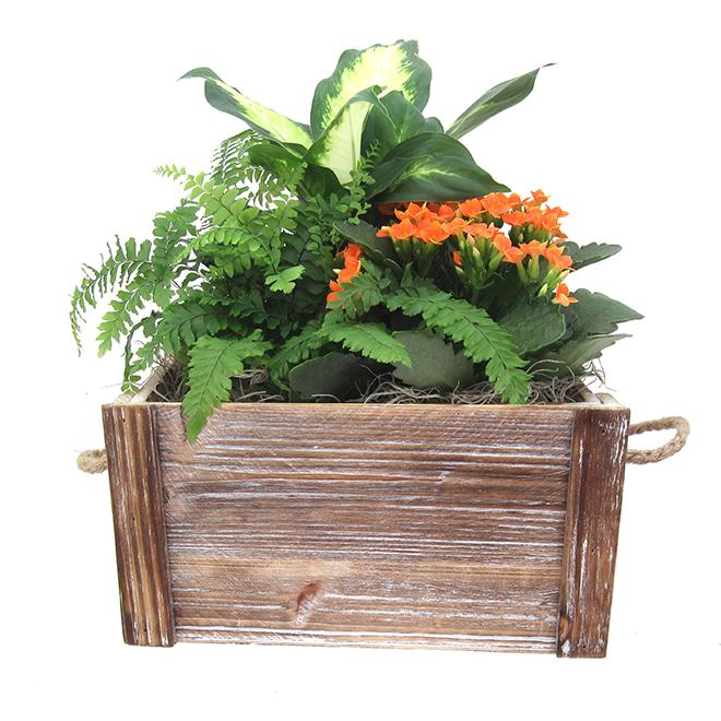 Plantes fleuries assorties, jardinière style caisse Elgin Crate