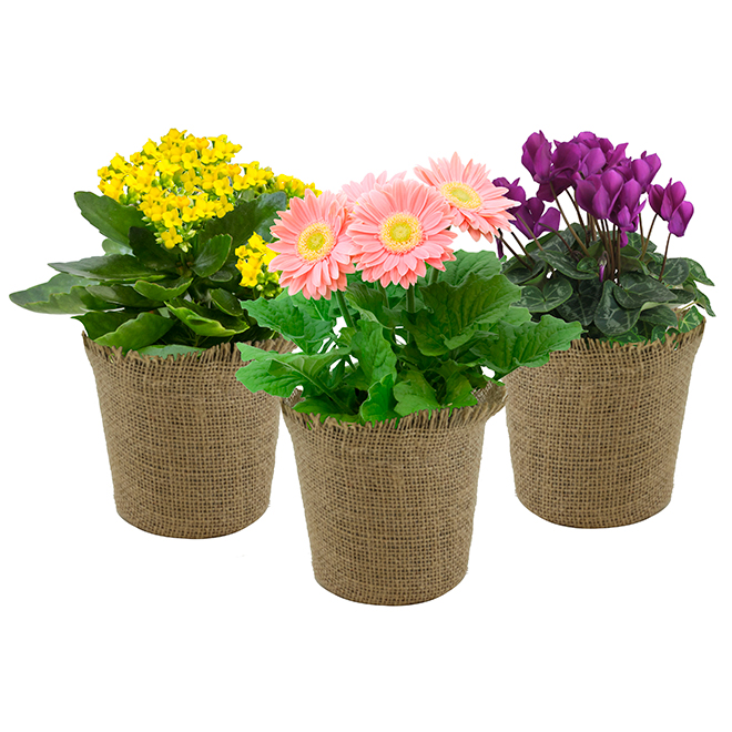 Blooming Plant - Woven Pot - Green