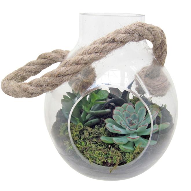 Glass Garden - 7 In