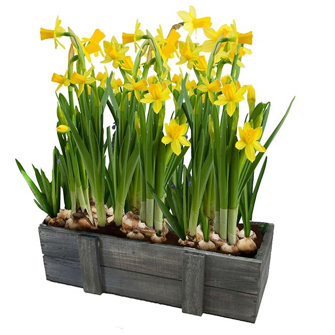 Bayview Flowers Spring Garden - Rustic Wooden Box - 10-in