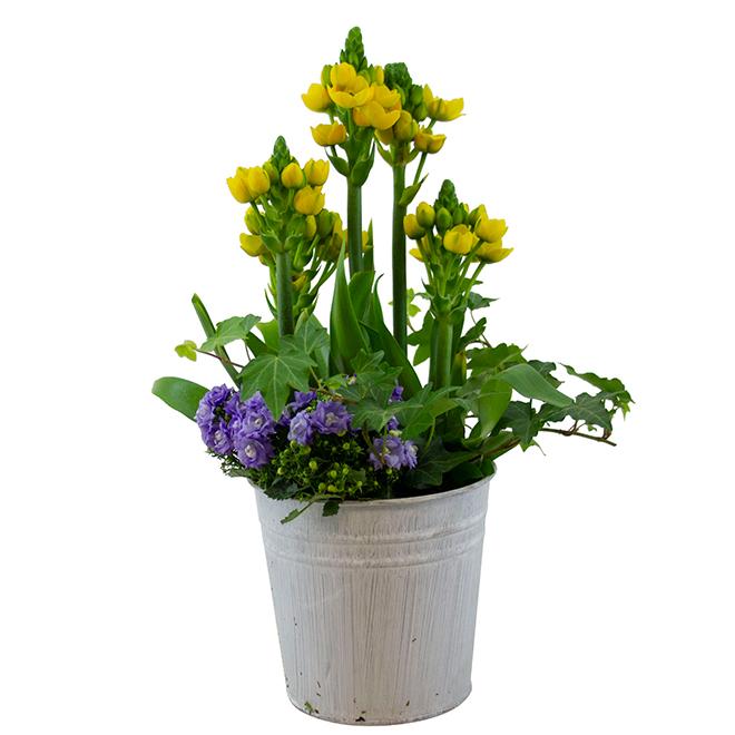 Jardin Printanier, Bayview Flowers, pot en acier galvanisé, 6 po
