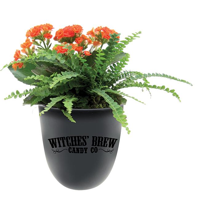Garden Witches Brew - Decorative Planter