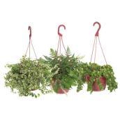 Panier suspendu, plantes assorties, 8''
