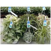 Assorted Plant - Planter of 10""