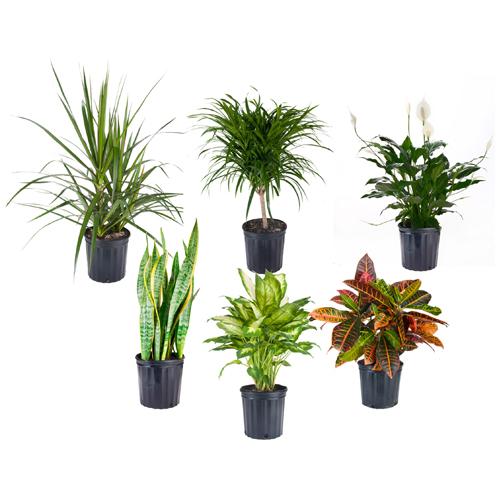 Plante tropicale