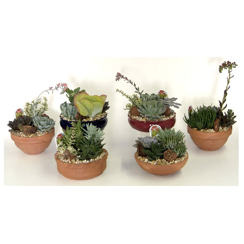 "Cactus Garden - 9"" Terra Cotta Pot - Assorted"