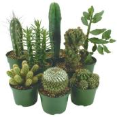 "Cactus - 1.5"" Pot - Assortment"