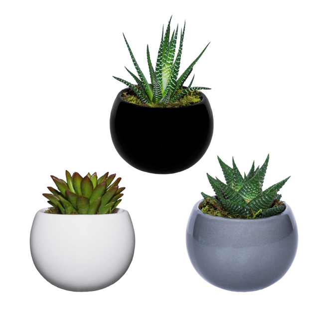 Live Trends - Magnetized Succulent Pot - 3'' - Ceramic