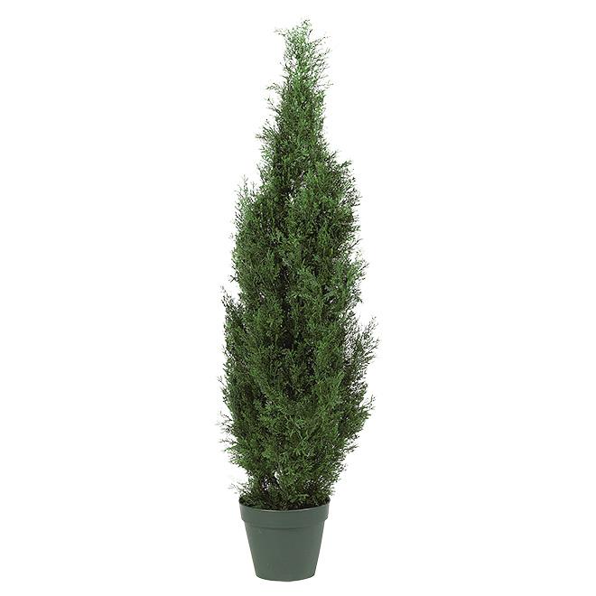 Cyprès européen, pot, 15 cm, vert