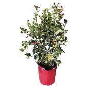 Decorated Holly - 15 cm