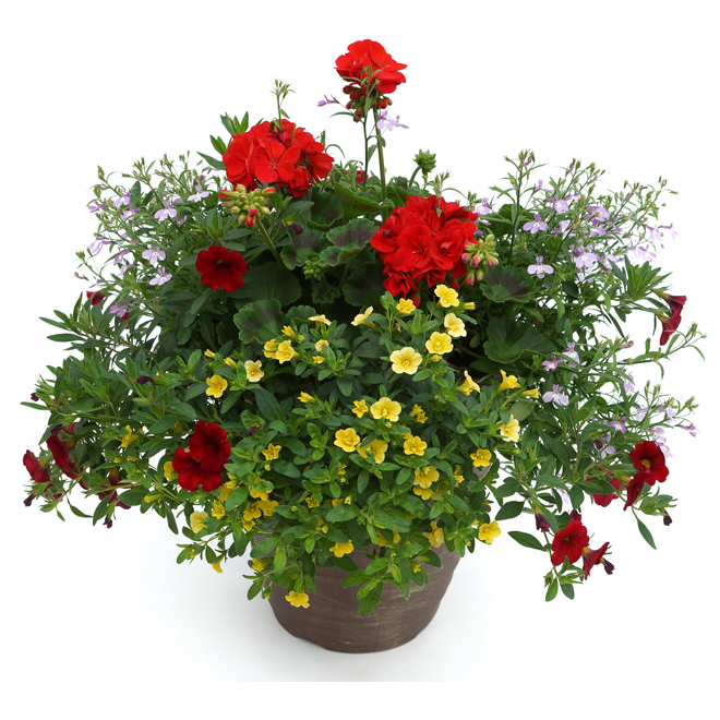 Arrangement de fleurs assorties, pot de 13''