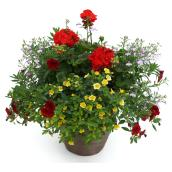 Assorted Flowering Plant Arrangement - 13'' Pot