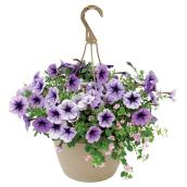 Assorted Annuals Hanging Baskets - 10-in