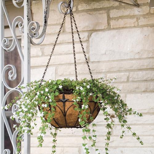 Hanging Basket  - Black Steel - Coco Fiber Liner - 14''