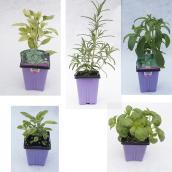 Fine Herbs