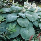 Decorative Foliage