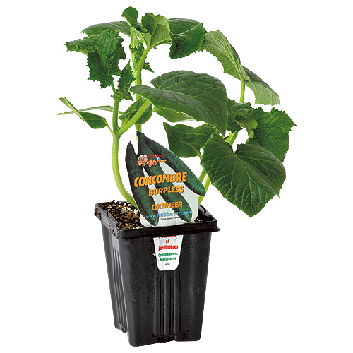 """""""Gourmet"""" Vegetable Plants"""