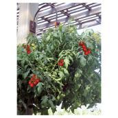 Panier suspendu de tomates et poivrons