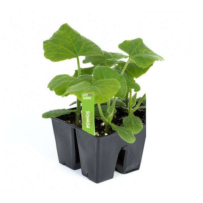 Légumes assortis, plateau de 6