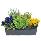 Herbs and Flower Patio Planter - 16-in