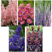 Deluxe Perennials - 20 cm - Assorted