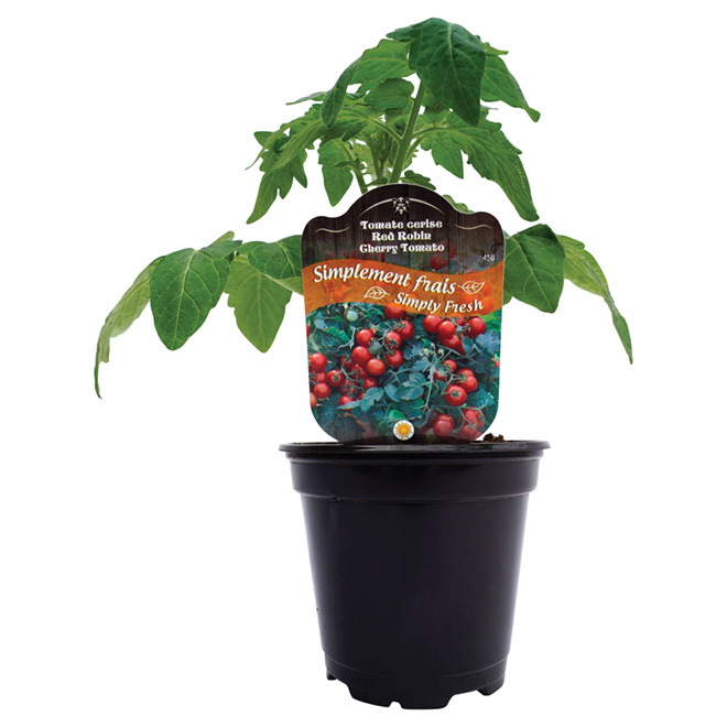Assorted Vegetables and Herbs - 4.5-in pot