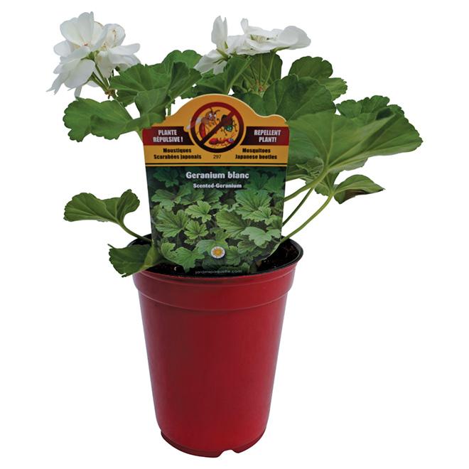 "Repellent Plant - 4.5"" - Assorted"