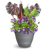 Plants de légumes et fleurs comestibles, pot de 10 po, couleurs assorties