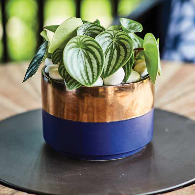 """Allen + Roth Ceramic Planter - 8"""" x 5.5"""" - Blue and Gold"""
