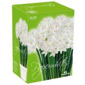 Perennial - White
