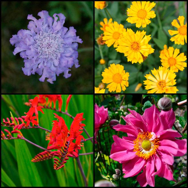 Assorted Perennials - # 1 Pot