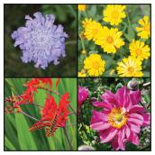 Assorted Perennials