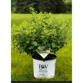 Proven Winners - Shrubs - 2 Ga - Assorted Colors