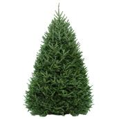 Sapin baumier coupé, Green Plus Nurseries, 5 à 6 pi, vert