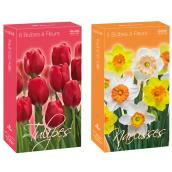 Flower Bulbs - Assorted