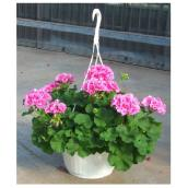 Fernlea Flowers Premium Hanging Basket - 10-in Assorted Colours