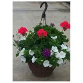Assorted Hanging Basket - 12'' Pot