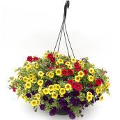 Fernlea Flowers Calibrachoa 12-in - Assorted Colours