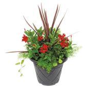 Fernlea Flowers - Patio Planter - Rio - 13''