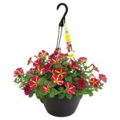 Assorted Hanging Basket - 11''