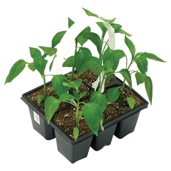Set of 6 Assorted Vegetable Seedlings