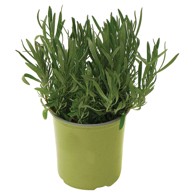 Assorted Herbs and Vegetables - 1-gallon Pot